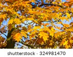 autumn background from oak... | Shutterstock . vector #324981470