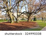 trees in the park | Shutterstock . vector #324990338