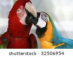 Macaws Kissing