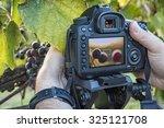 grape photography | Shutterstock . vector #325121708