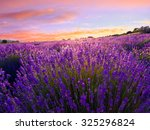 lavender field in summer near... | Shutterstock . vector #325296824
