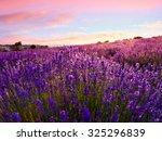 lavender field in summer near... | Shutterstock . vector #325296839