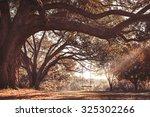 Empty Rustic Wooden Swing...