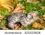 Stock photo little kitten lying on the grass with fallen leaves 325325828