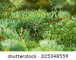 green fir tree or pine branches | Shutterstock . vector #325348559
