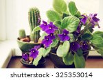 Potted African Violet ...