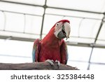 Macaw sitting perched - stock photo