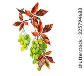 bunch of grapes | Shutterstock . vector #325794683