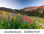 Wildflowers In The Wasatch...