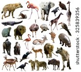 Set of hyenas and other african ...