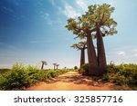 Baobab Trees Along The Unpaved...