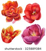 watercolor tulips on a white... | Shutterstock . vector #325889384