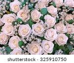 beautiful white roses for... | Shutterstock . vector #325910750