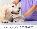 Small photo of My friend. Close up of nice dog lying on the table while professional vet holding and examining it