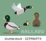 Mallard Cartoon Vector...