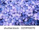 Hydrangea Flora Background.