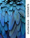 bird  blue and gold macaw... | Shutterstock . vector #326006876