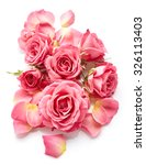 Stock photo pink roses isolated on white background 326113403
