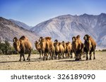 camel in the desert | Shutterstock . vector #326189090