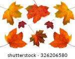 Small photo of Collection of maple leaves isolated on white background