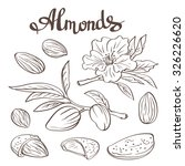 almonds with kernels  leaves... | Shutterstock .eps vector #326226620