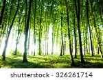 sunset in the woods | Shutterstock . vector #326261714