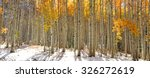 Colorful Aspen Trees In Snow At ...