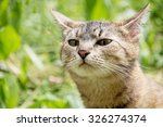 Stock photo a cat walks in the nature and sniffs in search of prey 326274374