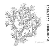 Forest Boxwood Tree Branch With ...