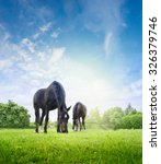 Horses Grazing On Fresh Grass...