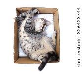 Stock photo scottish shorthair cat playing in paper box 326423744