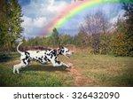 Dog Dalmatian Running Outdoors...