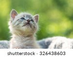 Stock photo kitten on basket close up 326438603