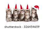 Group Maine Coon Kittens In Red ...
