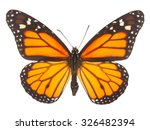 Orange Monarch  Butterfly...