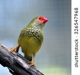 star finch   Shutterstock . vector #326547968