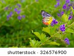 Butterfly On Flower  Blur...