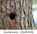Round Woodpecker Hole In Trunk...