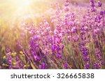 lavender bushes closeup on... | Shutterstock . vector #326665838