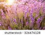 lavender bushes closeup on... | Shutterstock . vector #326676128
