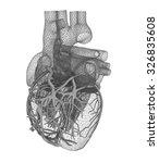 human heart | Shutterstock . vector #326835608
