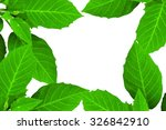 green leaves and white... | Shutterstock . vector #326842910