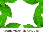 green leaves and white... | Shutterstock . vector #326842940