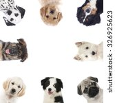 Stock photo square of different puppies dogs isolated 326925623