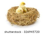 Pair Of Little Newborn Yellow...