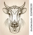 cow face portrait  front view ... | Shutterstock .eps vector #326988230