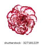 Beautiful Pink Carnation Flowe...