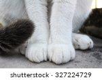 Stock photo feet of cat 327224729