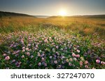 Flower In Meadow. Landscape...