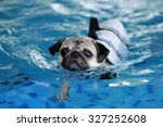 Pug Swim In Swimming Pool